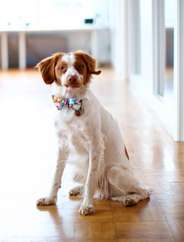 The lovely Mr. Paco in our Toronto office